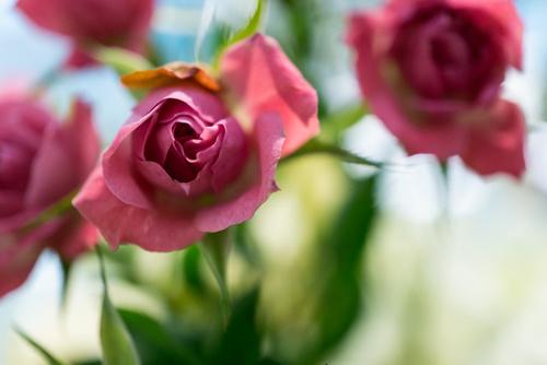 Rituales de amor para atraer a la persona que amas