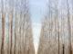 Magia blanca con la dama de los bosques para atraer el amor